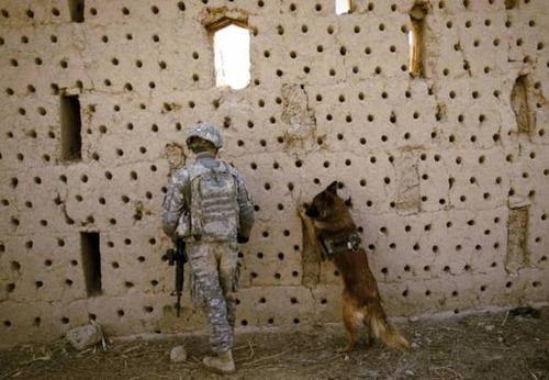 戦地での軍用犬の日常がわかるちょっと癒される画像の数々!!の画像(60枚目)