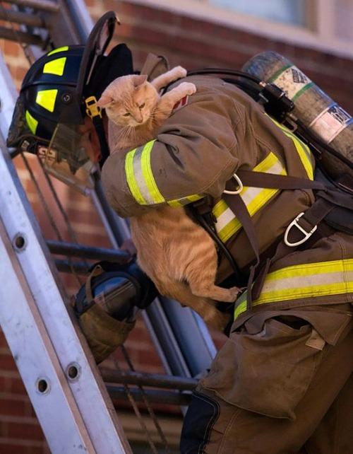 【画像】動物達も本気で助ける!ちょっと癒されるレスキュー隊の仕事の様子!!の画像(7枚目)