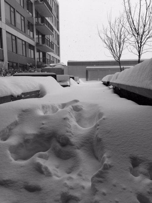 【画像】大雪のニューヨークで日常生活が大変な事になっている様子!の画像(5枚目)
