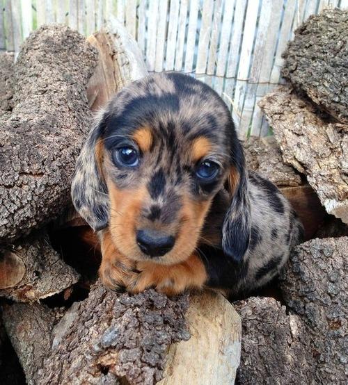 かわい過ぎる子犬の画像の数々!の画像(41枚目)