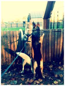 ずっと友達!仲がいい犬たちの画像が癒される!!の画像(28枚目)