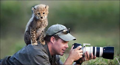 【画像】自然を撮影するカメラマンに興味津々の動物達!!の画像(12枚目)