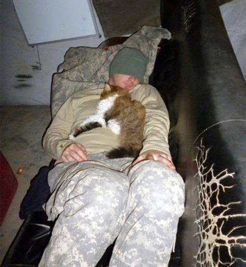 戦場にもネコは居る!!極限状態でも癒される戦場のネコの画像の数々!!の画像(15枚目)