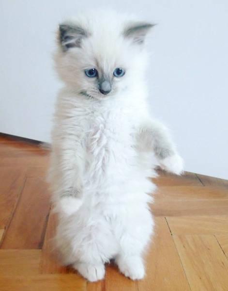 kittens_24
