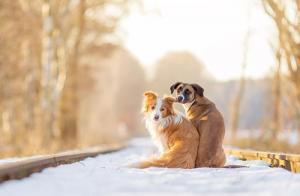 ずっと友達!仲がいい犬たちの画像が癒される!!の画像(18枚目)