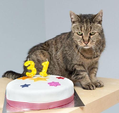 31歳の誕生日を迎えたネコの画像(4枚目)