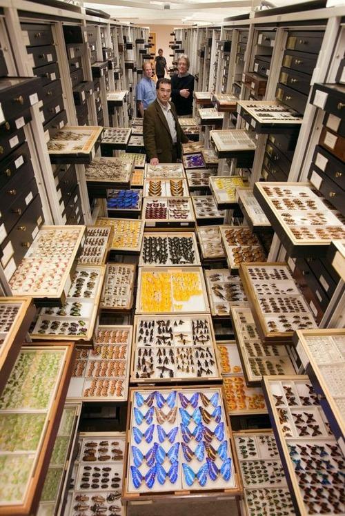 【画像】アメリカを代表するスミソニアン博物館の標本の保存倉庫が凄い!!の画像(4枚目)
