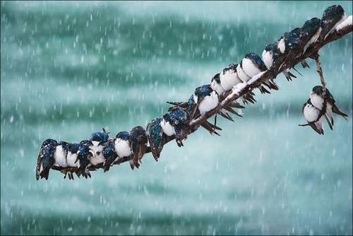 超過密!密集状態の鳥の画像がもふもふで癒されるwwの画像(2枚目)