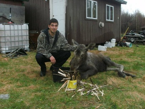 【画像】森の中で保護された巨大な鹿ムースの子供が可愛い!!の画像(6枚目)