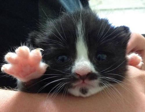 kittens_30