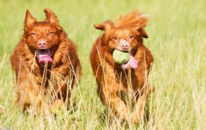 ずっと友達!仲がいい犬たちの画像が癒される!!の画像(24枚目)