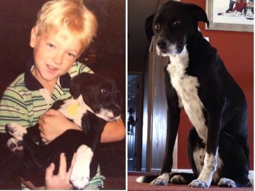 犬や猫の最初に撮った写真と最後に撮った写真の数々の画像(14枚目)