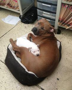 ずっと友達!仲がいい犬たちの画像が癒される!!の画像(10枚目)