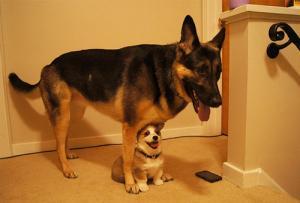 ずっと友達!仲がいい犬たちの画像が癒される!!の画像(2枚目)