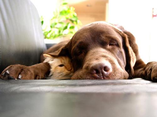 ほのぼのする!仲の良い犬と猫の画像の数々!!の画像(29枚目)