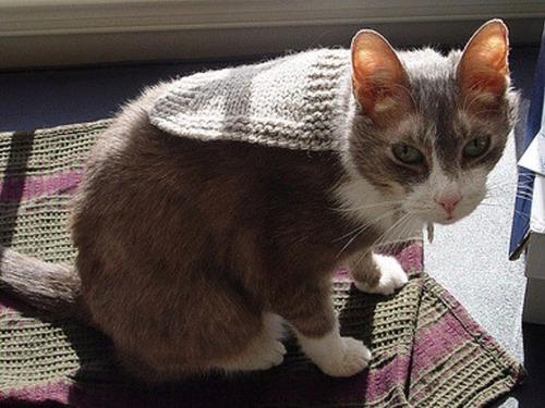 猫ちゃんのかわいいコスプレの画像(16枚目)