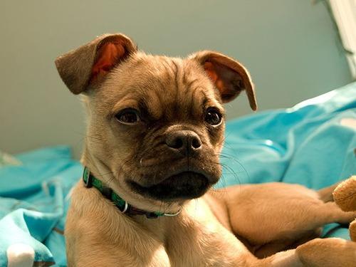 可愛い?可愛くない?ちょっと特徴的な雑種の犬の画像の数々!!の画像(10枚目)