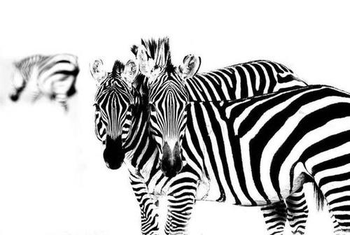 野生の動物達の画像(3枚目)