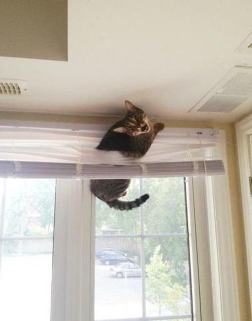 なぜ猫は狭いところが好きなのか??挟まっている猫の画像の数々wwwの画像(16枚目)