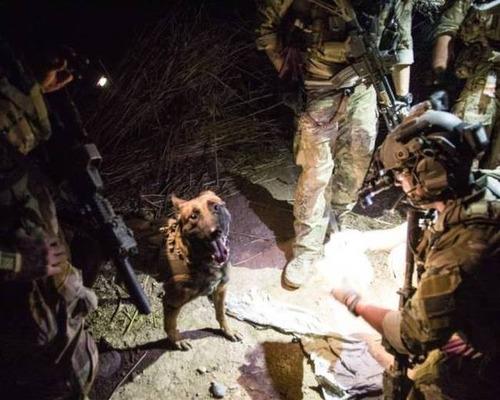 戦地での軍用犬の日常がわかるちょっと癒される画像の数々!!の画像(57枚目)