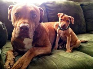 ずっと友達!仲がいい犬たちの画像が癒される!!の画像(8枚目)