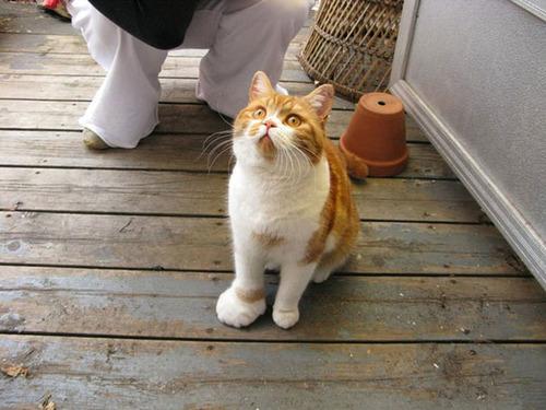 蜂に刺された猫が可愛いそうだけど可愛いwwwwの画像(4枚目)