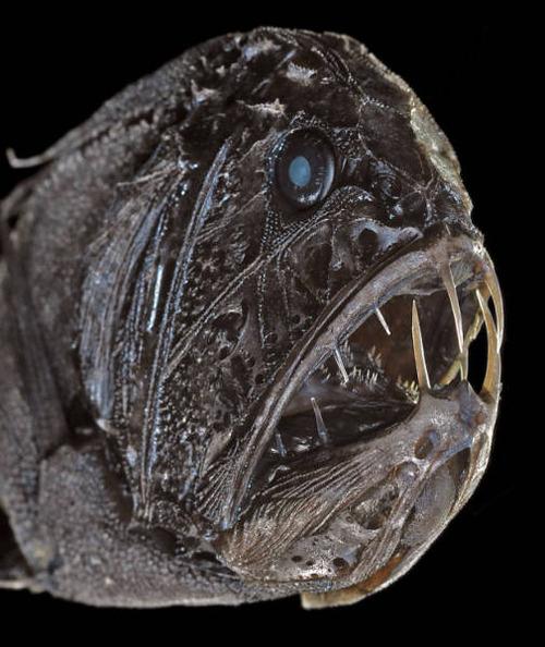 深海の生物の画像(12枚目)