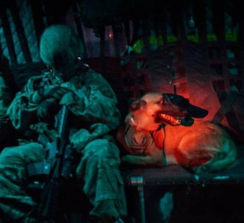 戦地での軍用犬の日常がわかるちょっと癒される画像の数々!!の画像(70枚目)