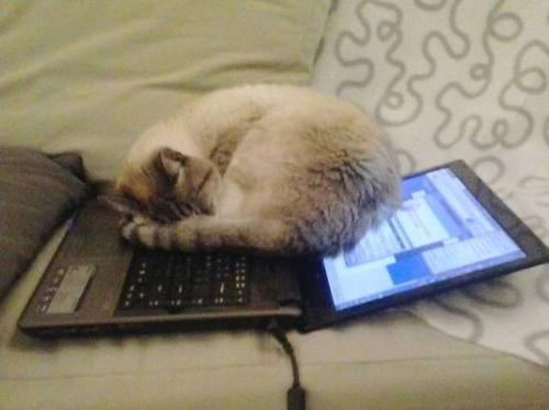 にゃんとも言えない、ちょっと困った猫の画像の数々!!の画像(3枚目)
