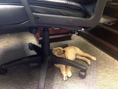 どこでも寝れる!?どこでも寝てる可愛い犬の画像の数々!!の画像(19枚目)