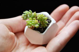 【画像】狭くても大丈夫!小さな植木が綺麗に飾れる工夫の数々!の画像(4枚目)
