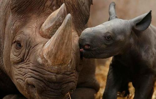 色々な動物の親子の癒される画像の数々!!の画像(1枚目)