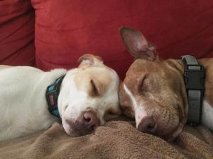 ずっと友達!仲がいい犬たちの画像が癒される!!の画像(5枚目)