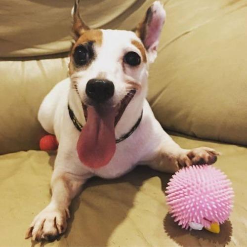 犬も笑うの画像(1枚目)