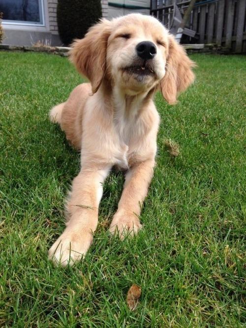 かわい過ぎる子犬の画像の数々!の画像(8枚目)