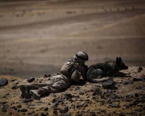 戦地での軍用犬の日常がわかるちょっと癒される画像の数々!!の画像(69枚目)