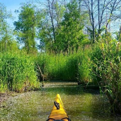 カヤック(カヌー)に乗る理由がわかる川沿いの風景の画像の数々!!の画像(9枚目)