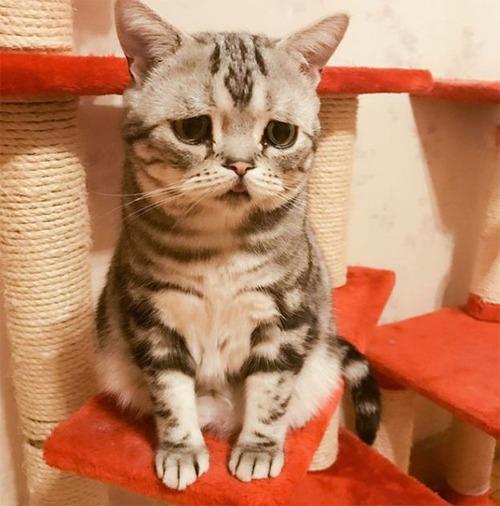 悲しくなってしまう猫の画像(2枚目)