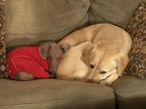 ずっと友達!仲がいい犬たちの画像が癒される!!の画像(37枚目)