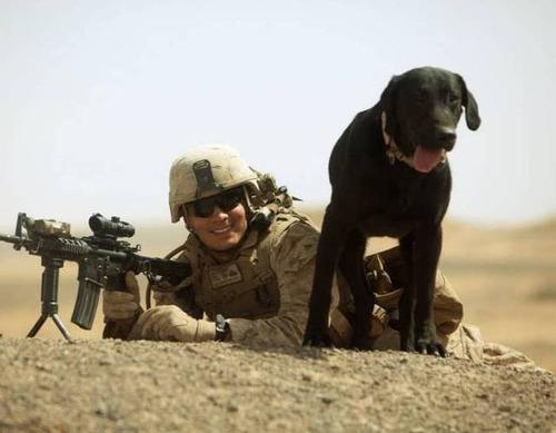 戦地での軍用犬の日常がわかるちょっと癒される画像の数々!!の画像(59枚目)