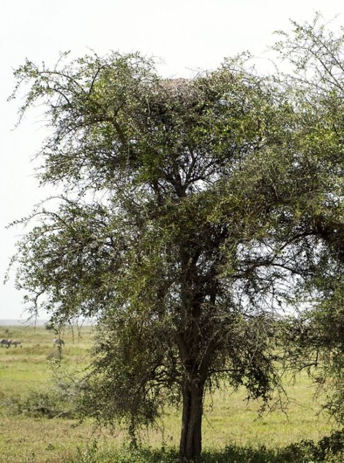 【画像】この木に近づいたら死にます…恐ろしすぎる獣が潜んでいる木。。の画像(2枚目)