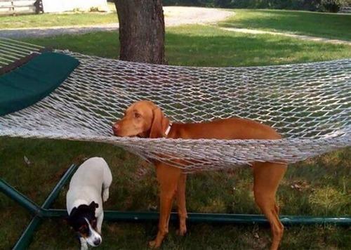犬はバカ可愛い!!バカだけど憎めない可愛い犬の画像の数々!!の画像(29枚目)