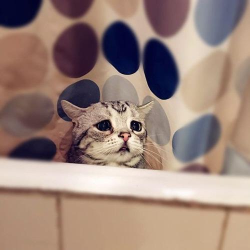 悲しくなってしまう猫の画像(6枚目)