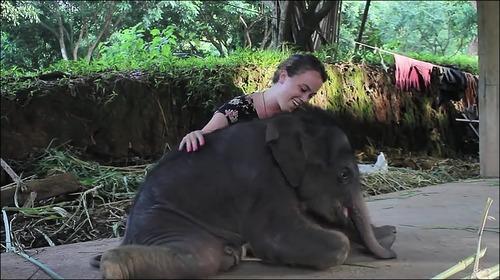 【動画】子供のゾウに懐かれると嬉しい_000019782