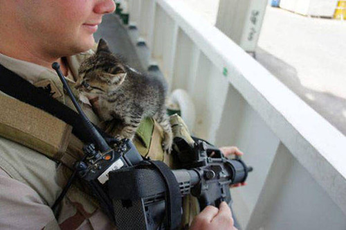 戦場にもネコは居る!!極限状態でも癒される戦場のネコの画像の数々!!の画像(10枚目)