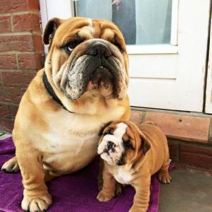ずっと友達!仲がいい犬たちの画像が癒される!!の画像(3枚目)