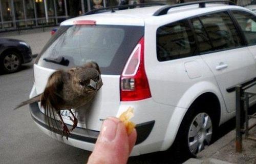 動物たちの驚きの瞬間の画像(2枚目)