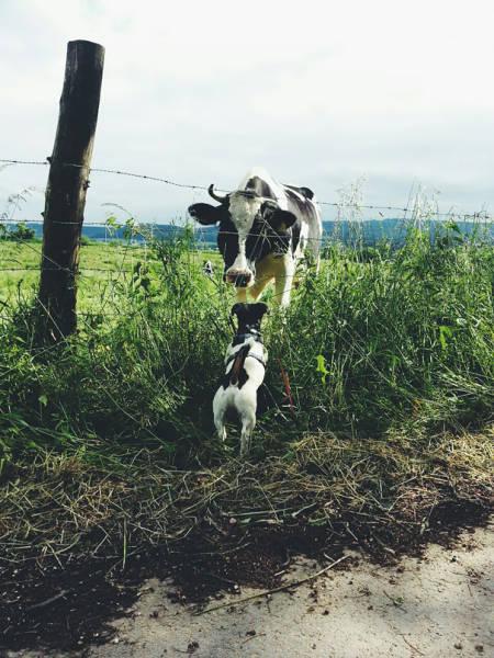 親子に見えてしまう動物たちの画像(8枚目)