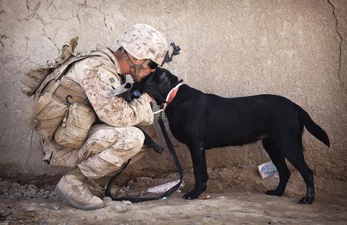 辛くても癒される!軍用犬でほのぼのしている写真の数々!!の画像(3枚目)