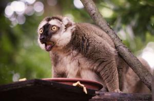 動物達が驚いている瞬間の表情をとらえた写真が凄い!の画像(18枚目)